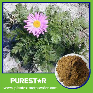 Pyrethrum Extract,Pyrethrin