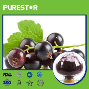 Black Currant Extract,Anthocyanidin