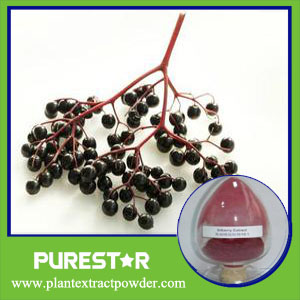 Elderberry Extract,Anthocyanidins