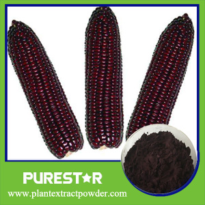 Purple Corn Extract,Anthcoandins