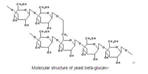 Molecular structure of yeast beta glucan